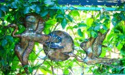 Outdoor copper art - cranes 2 by Sooriya Kumar